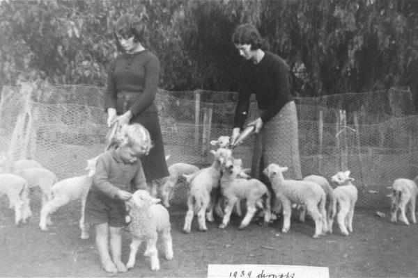 PP Clee family feeding lambs 1939 Lockington Dist Living Heritage Complex