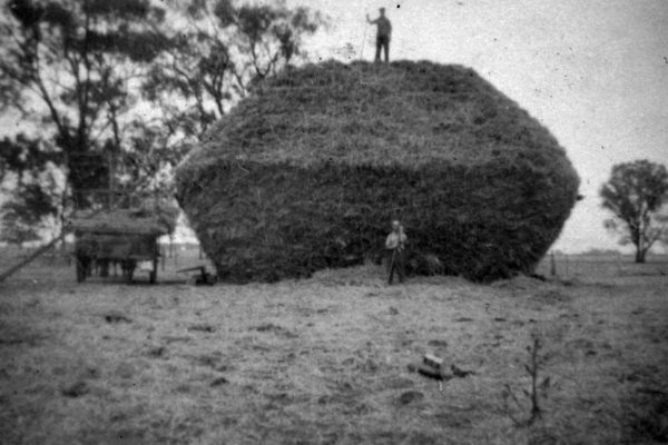 PP Stacking hay east of Lockinvgton 1930s Lockington & Dist Living Heritage Complex
